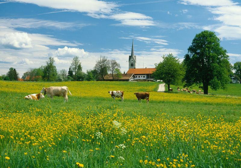 Voralpenlandschaft bei Bad Tölz, Oberbayern, Bayern, Deutschland