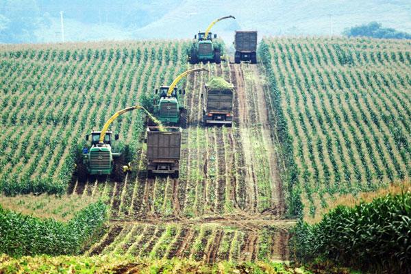 Nhiều doanh nghiệp rót vốn đầu tư lớn vào nông nghiệp