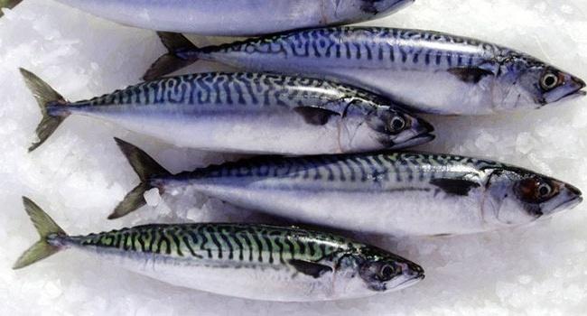 Đặc sản Cá thu nướng Cửa Lò được công bố nhãn hiệu
