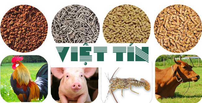 Tìm hiểu về hồ sơ xin công bố hợp quy đối với phụ gia trong thức ăn chăn nuôi