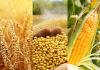 Kiểm nghiệm nông sản